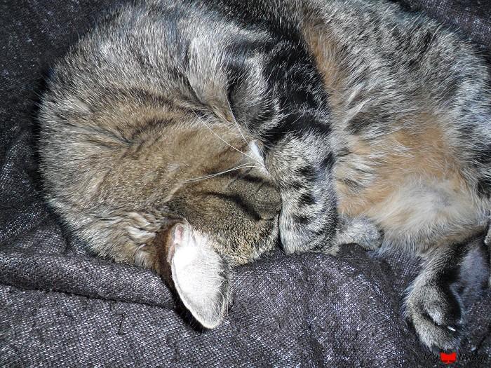 cat52