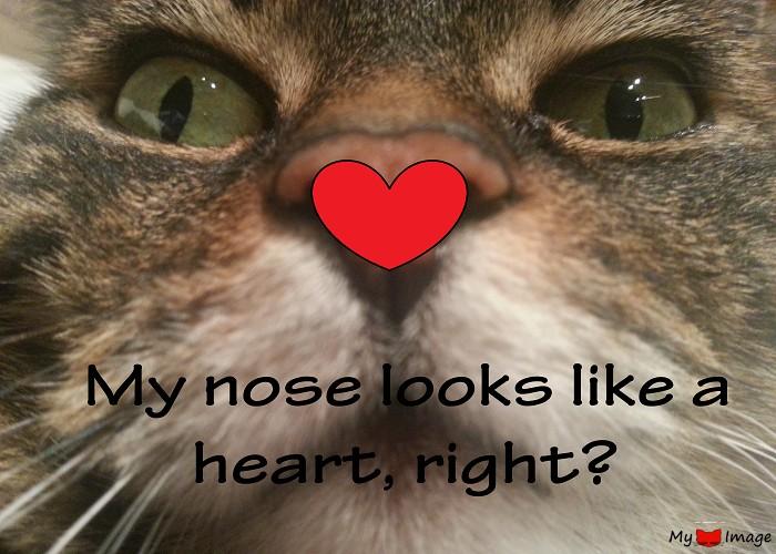 nose like heart