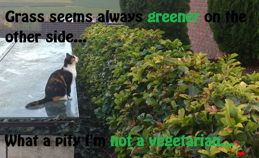 Grass is always greener…over there!