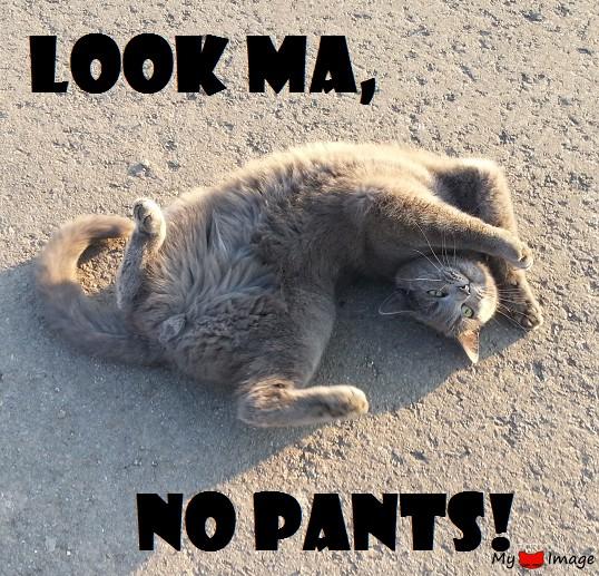 Look Ma, no Pants!