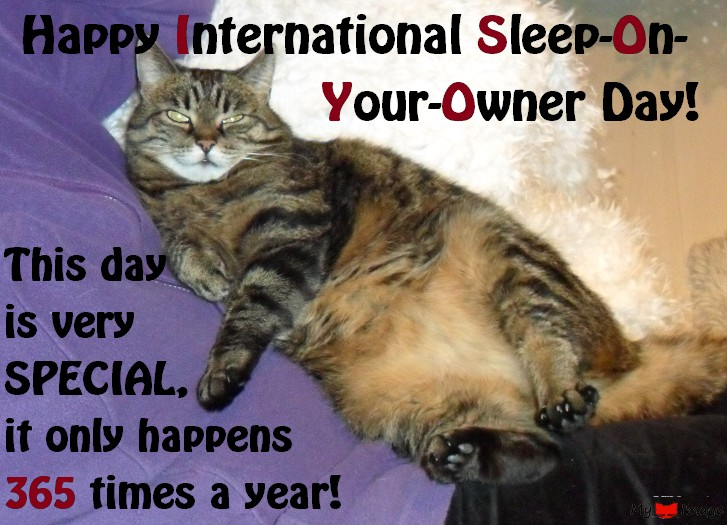 Happy International Sleep-on-Your-Owner Day!