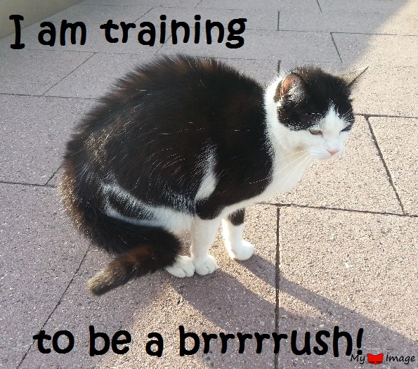training for a brush