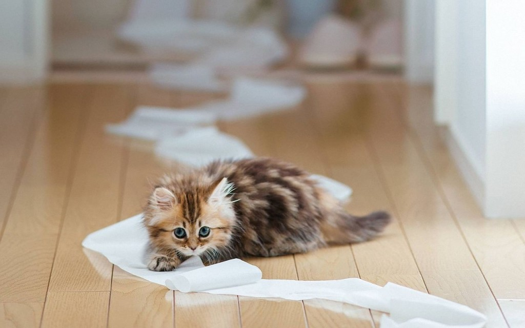 Just a bit of playing with the toilet paper - no problem at all...
