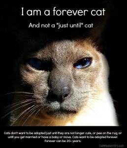 Forever_Cat