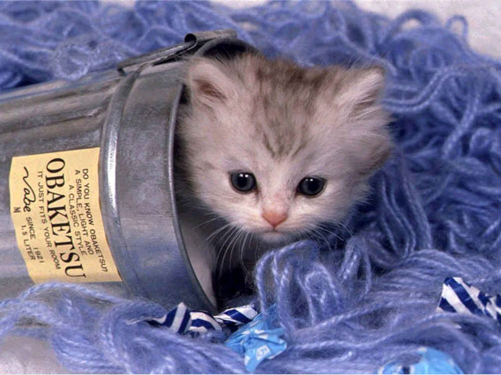 Adult cat or a kitten – what to expect? (2)