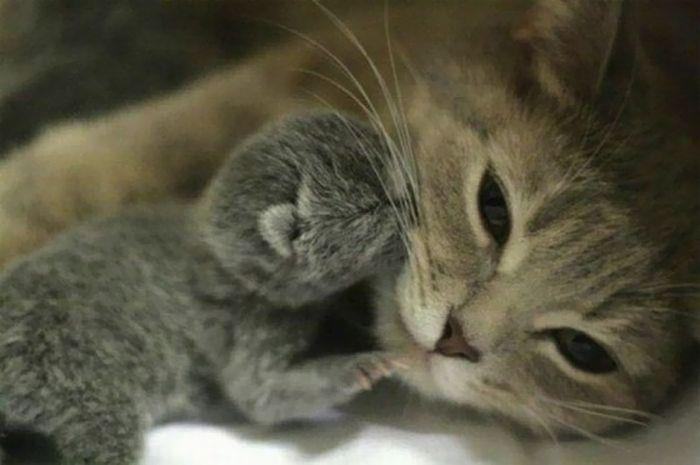 Mother and kitten...